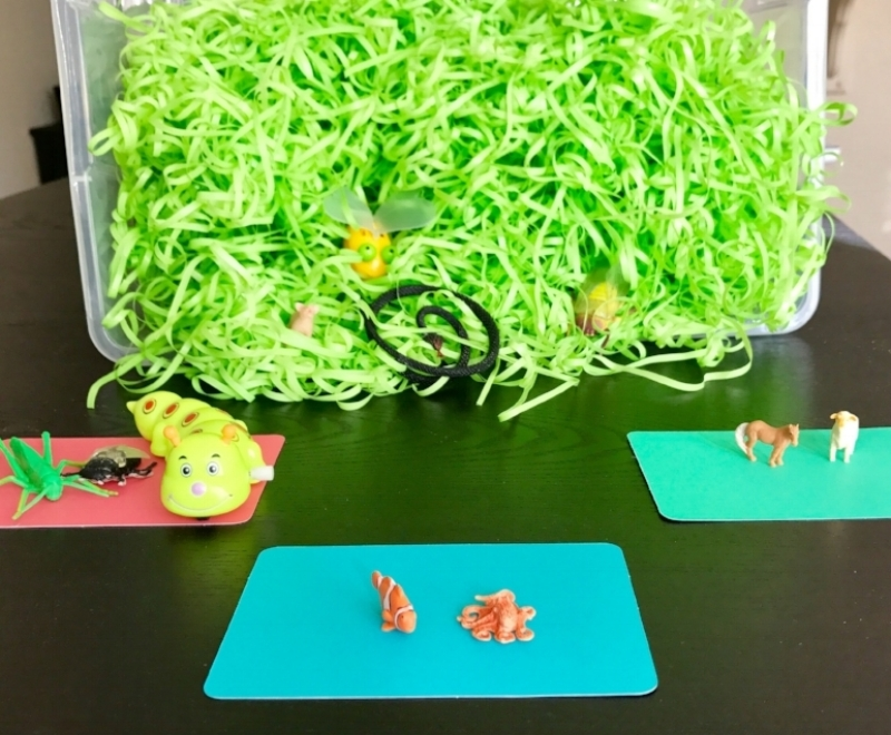 "When children are learning categories, it's helpful to offer visual clues for how and where to group items. This can be done with written category names (e.g., ""Insects,"" ""Ocean Animals,"" ""Farm Animals""), pictures, containers, or even just pieces of paper in different colors."