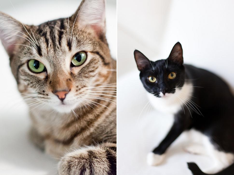 Kittens_0001.jpg
