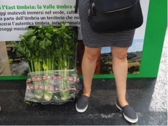 Trevi black celery , the tallest celery I'd ever seen.  https://www.fondazioneslowfood.com/en/slow-food-presidia/trevi-black-celery/