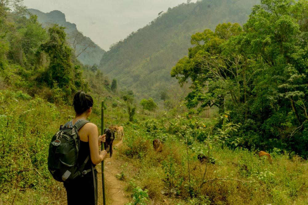 Laos (11 of 24).jpg