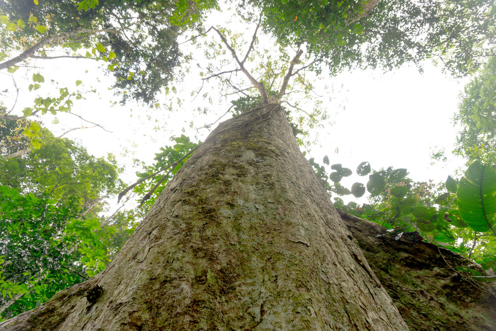 Laos (12 of 24).jpg