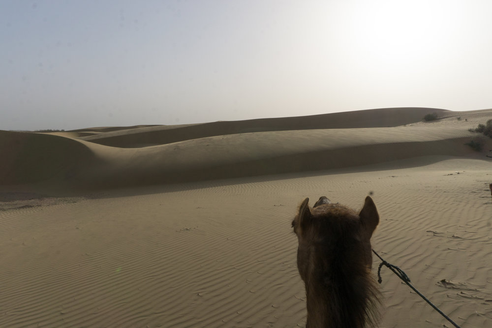 Exploring on camel