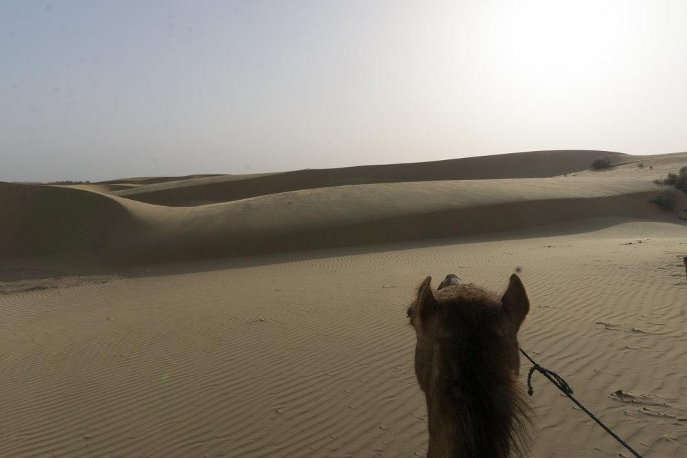 Exploring on camel