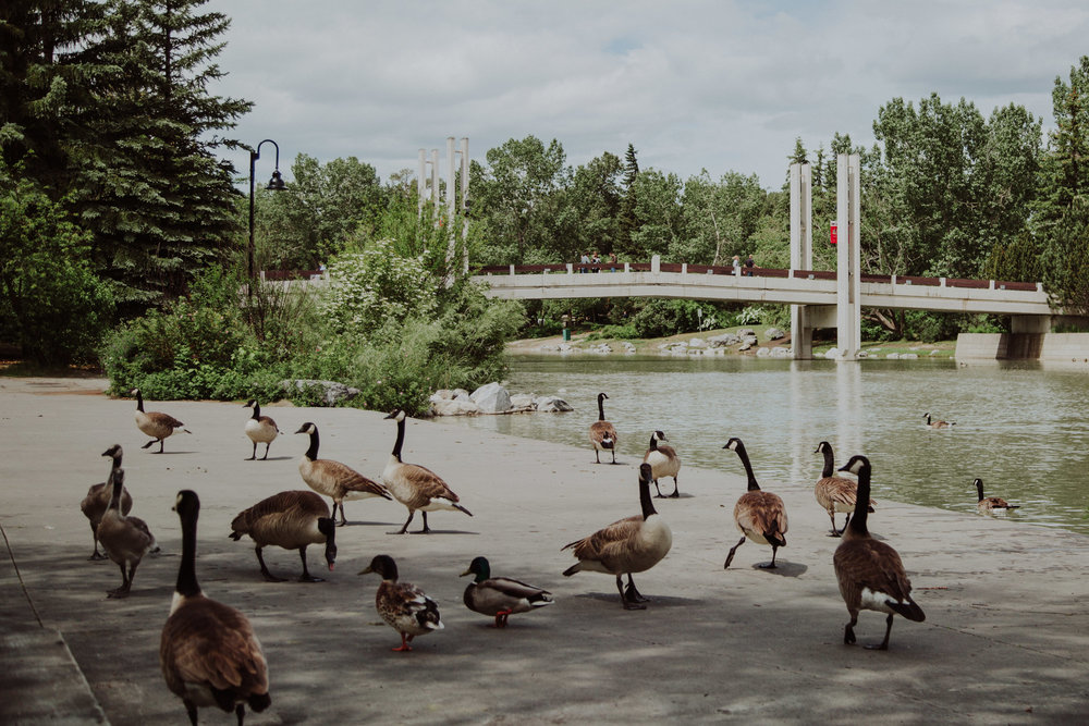 Calgary-7.jpg