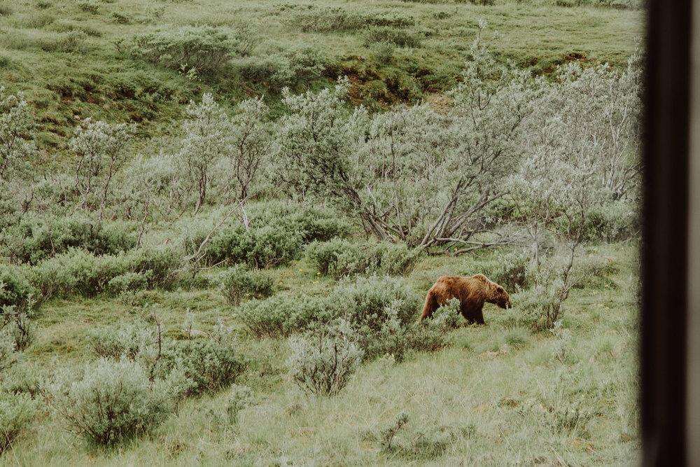 Alaska-10.jpg