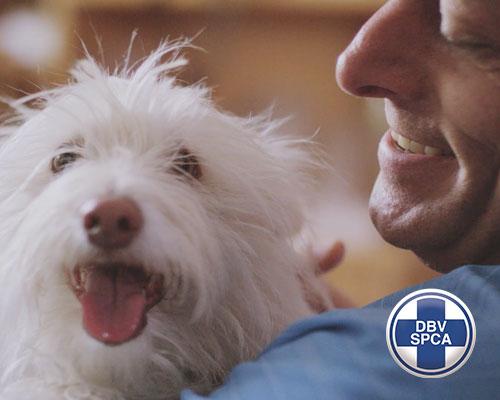 Award Winning ATL Campaign - SPCA Animal Welfare