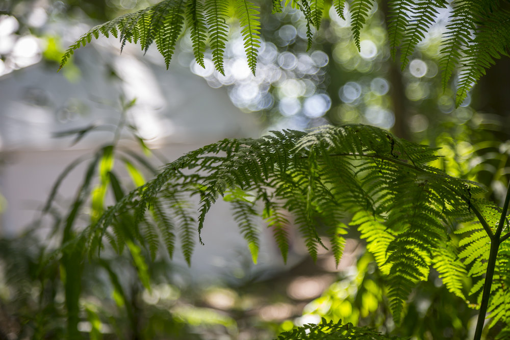 Lovely ferns.jpg