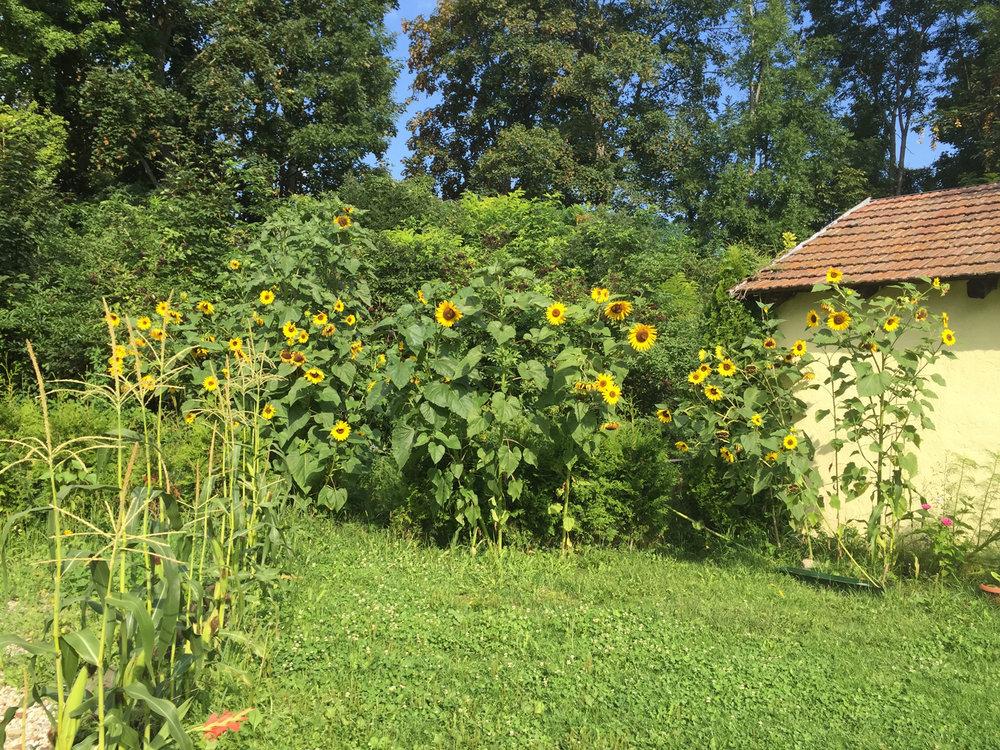 Der Garten_15_.jpg
