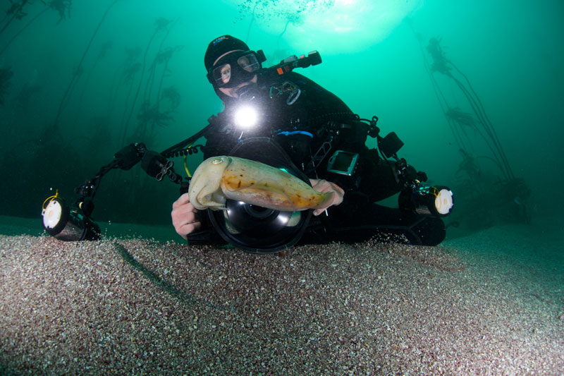Steve photographing cuttlefish on a dive amongst the kelp forest in South Africa.