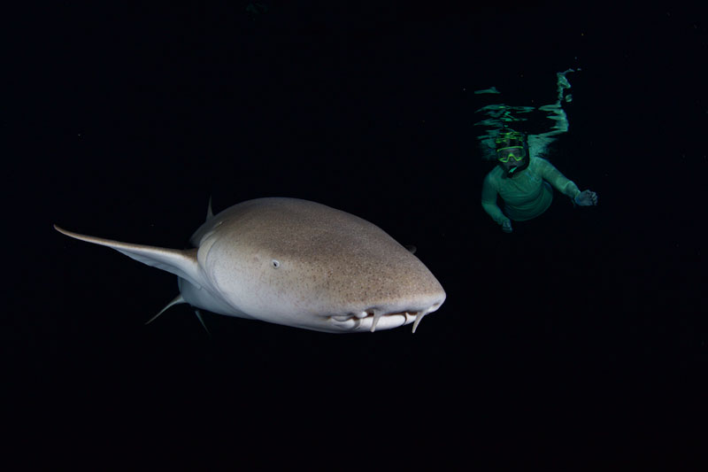 Catherine on a night snorkel with Nurse sharks.