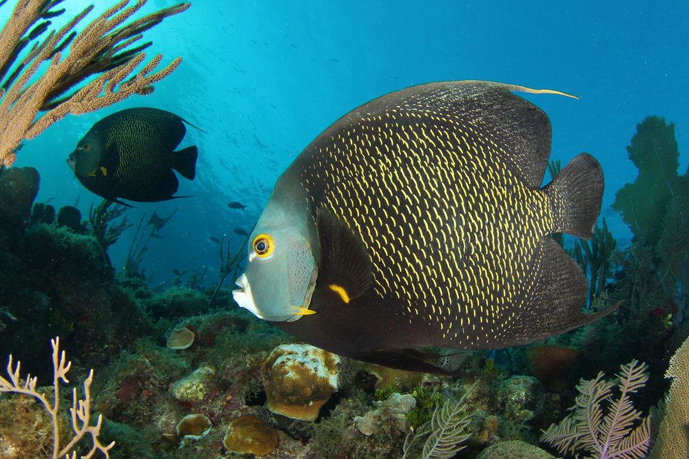 CUB_Avalon-II-Underwater-©12-Noel-IMG_6020.jpg