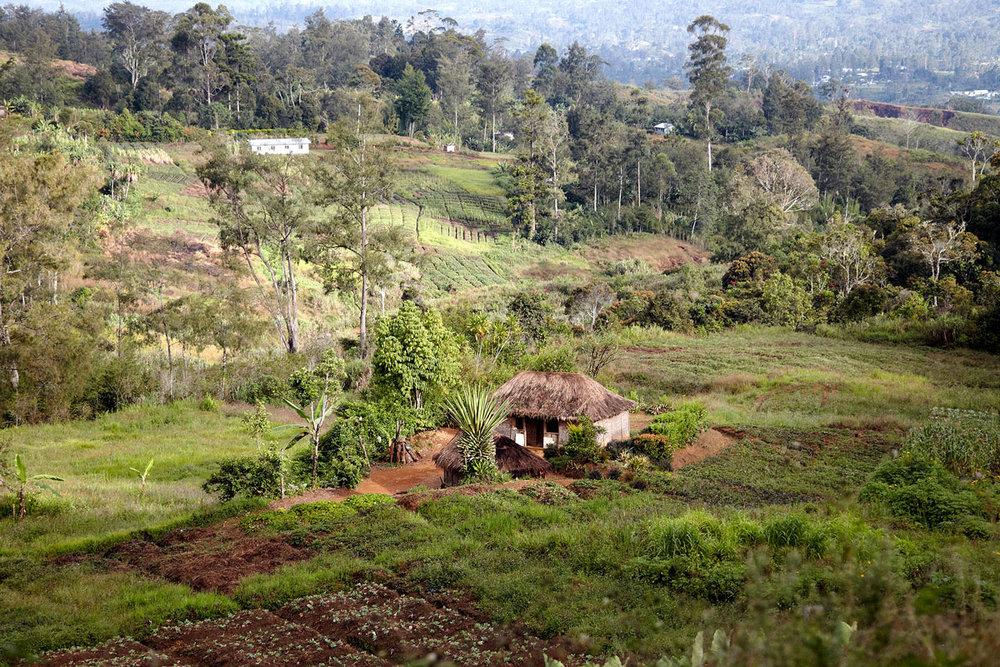 PNG_Papua-New-Guinea-Nature-©-Trans-Niugini-Tours-0210.jpg