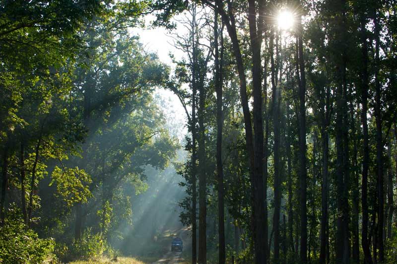 IND_Kanha-National-Park-©12-Thomas-Baechtold-0023.jpg