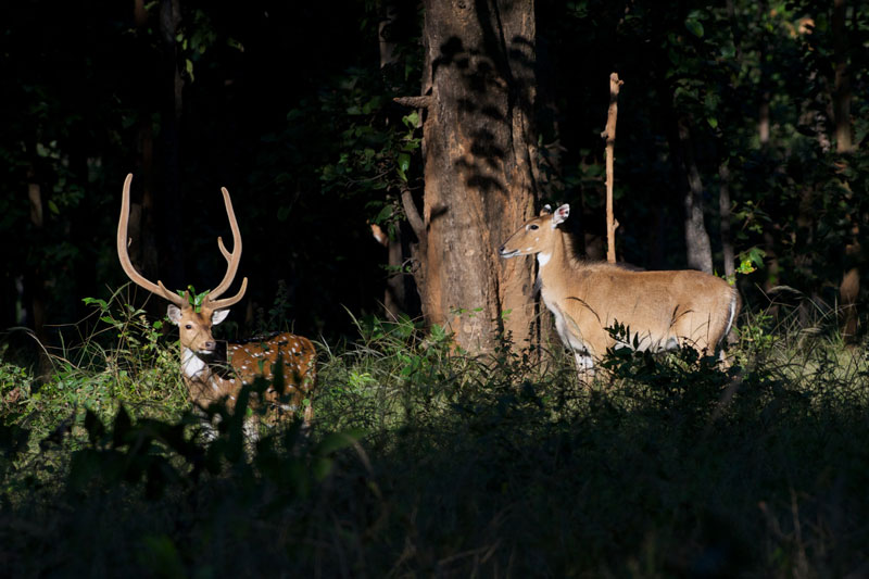 IND_Bandhavgarh-National-Park-©12-Thomas-Baechtold-0027.jpg