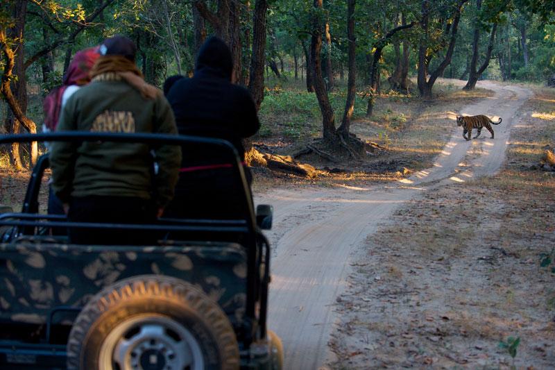 IND_Bandhavgarh-©12-Thomas-Baechtold-0219.jpg
