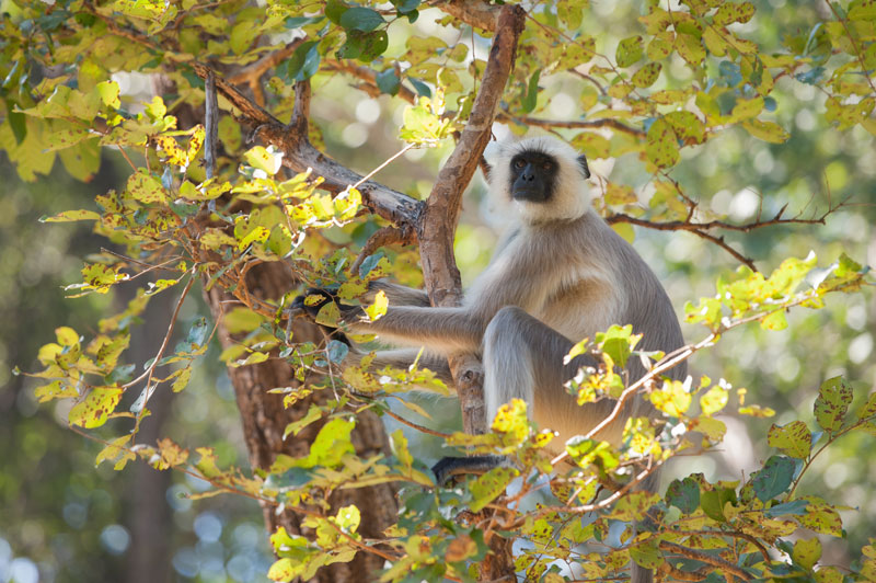 IND_India-©12-Lori-Gross-1378.jpg