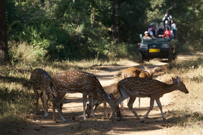 IND_Kanha-National-Park-©12-Thomas-Baechtold-0065.jpg
