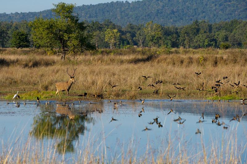IND_Kanha-National-Park-©12-Thomas-Baechtold-0288.jpg
