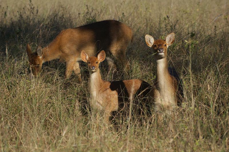 IND_Kanha-National-Park-©12-Thomas-Baechtold-0346.jpg