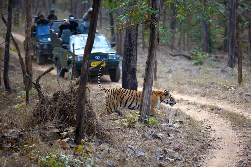 IND_Pench-Nat-Park-©14-Thomas-Baechtold-2895.jpg