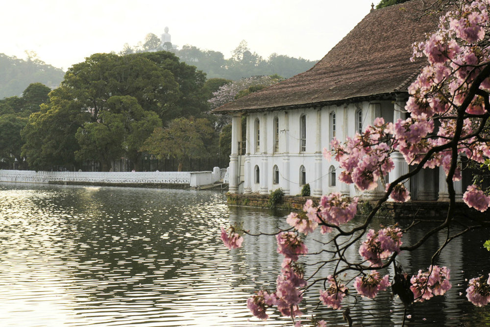 LKA_Kandy-Lake-Blossoms-©-Sri-Lanka-Instyle.jpg