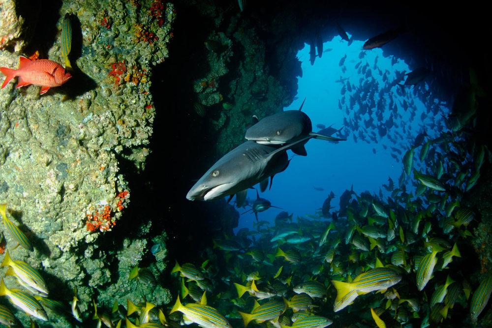CRI_Cocos-Island-Underwater-©-Avi-Klapfer-30.jpg