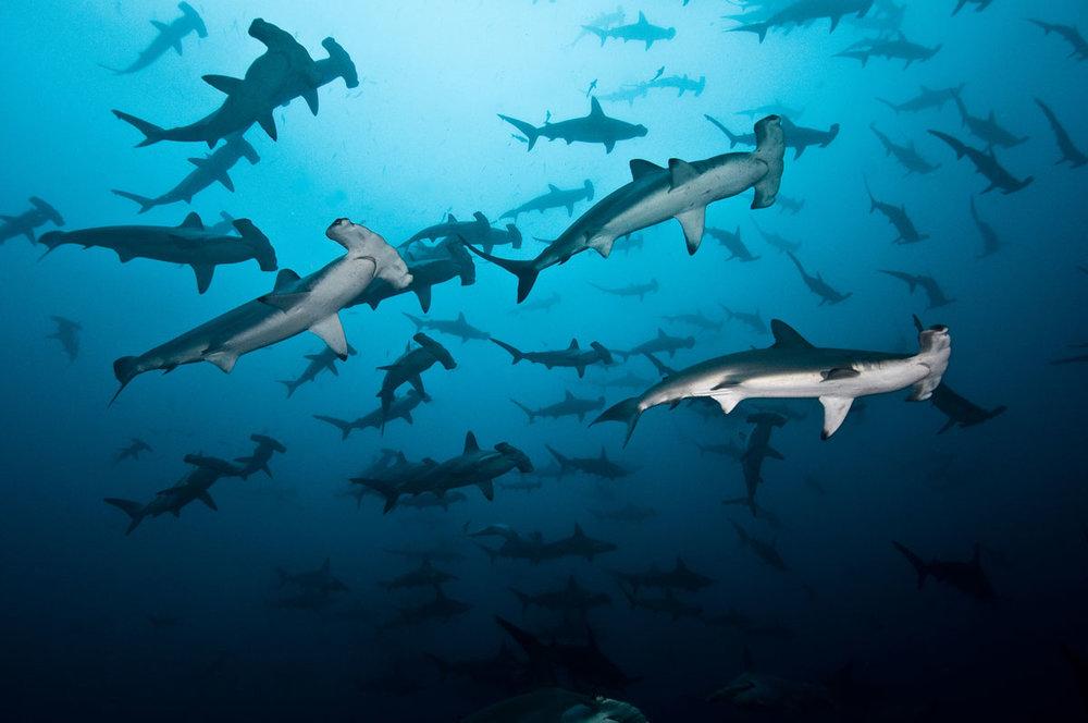 CRI_Cocos-Island-Underwater-©-Edwar-Herreno-17-1.jpg