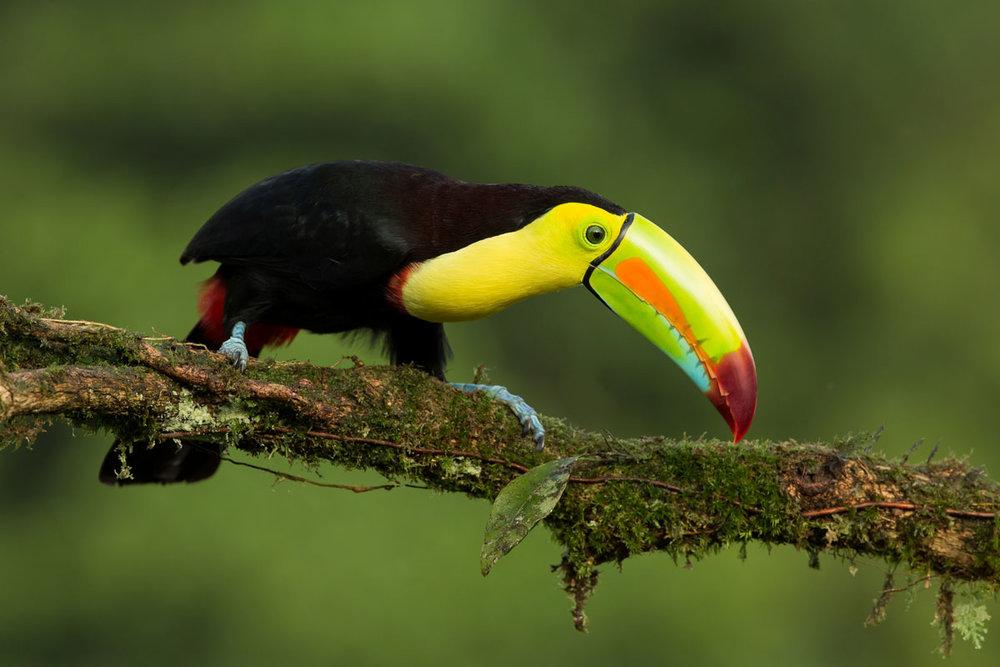 CRI_Sarapiqui-Bird-©-Horizontes-0X5A0238.jpg