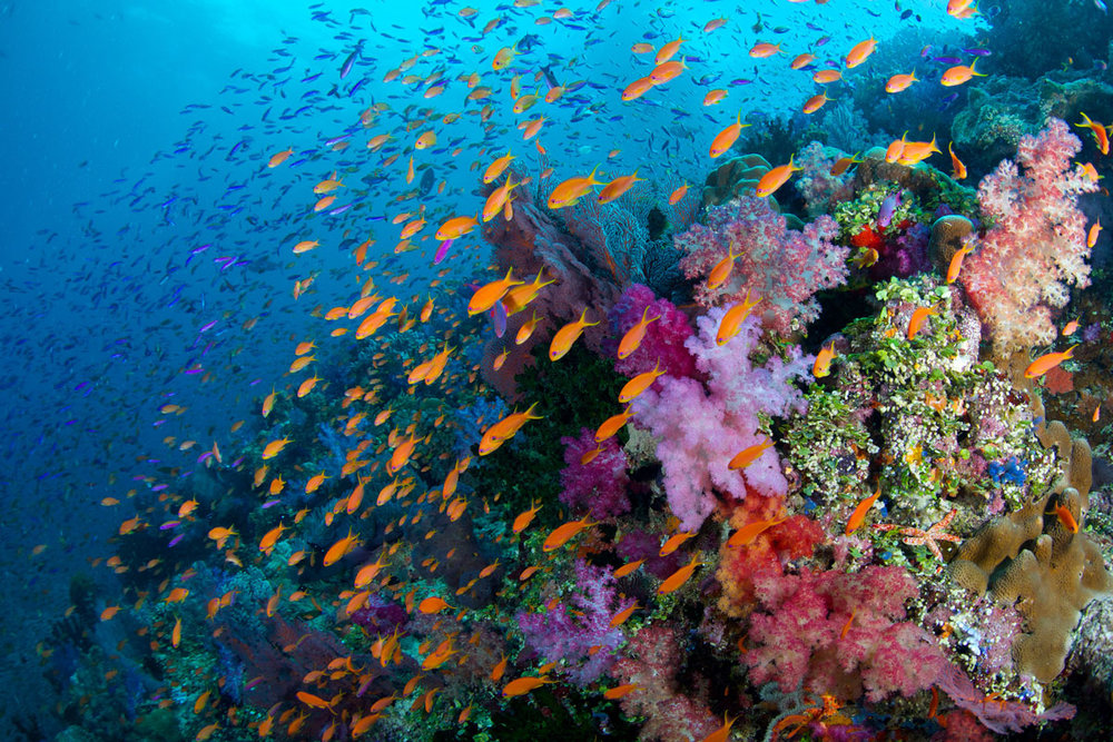 FJI_Rainbow-Reef-©14-Thomas-Baechtold-2111.jpg