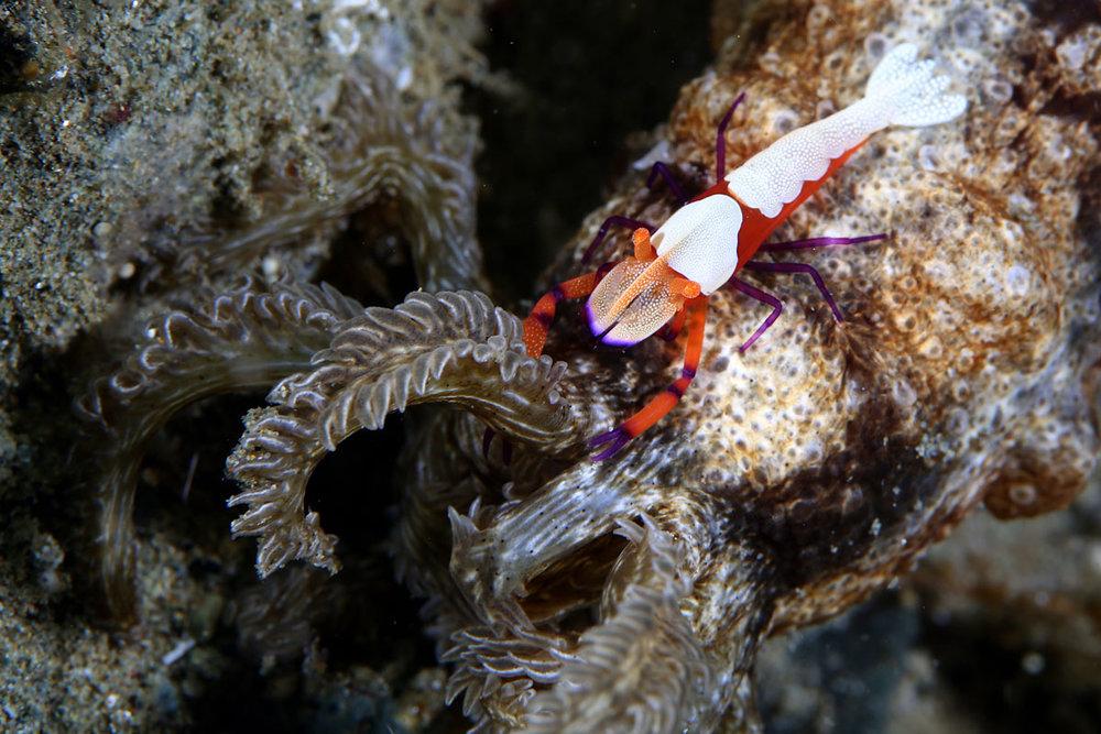 IDN_Ambon-Muck-diving-uw-©17-Thomas-Baechtold-1280.jpg