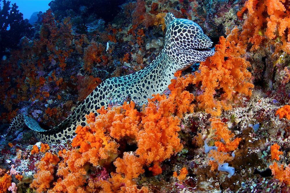IDN_Banda-Islands-uw-©17-Thomas-Baechtold-111.jpg