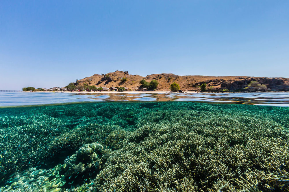 IDN_Komodo-Resort-House-Reef-©-Komodo-Resort-048.jpg