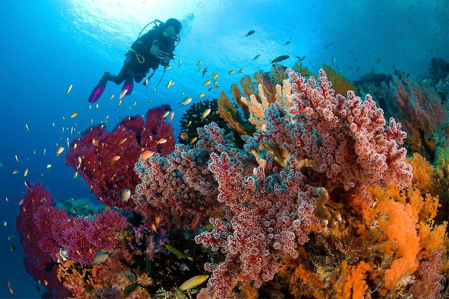 IDN_Reef_006.jpg