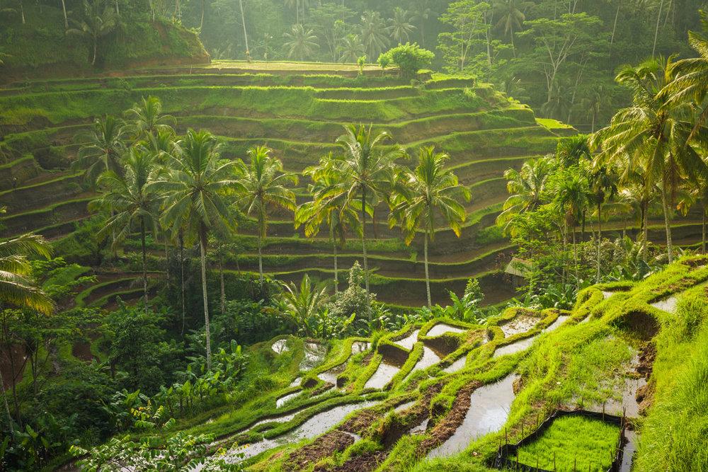 IDN_Ubud-Rice-Terraces-©-Adobe-Stock.jpg