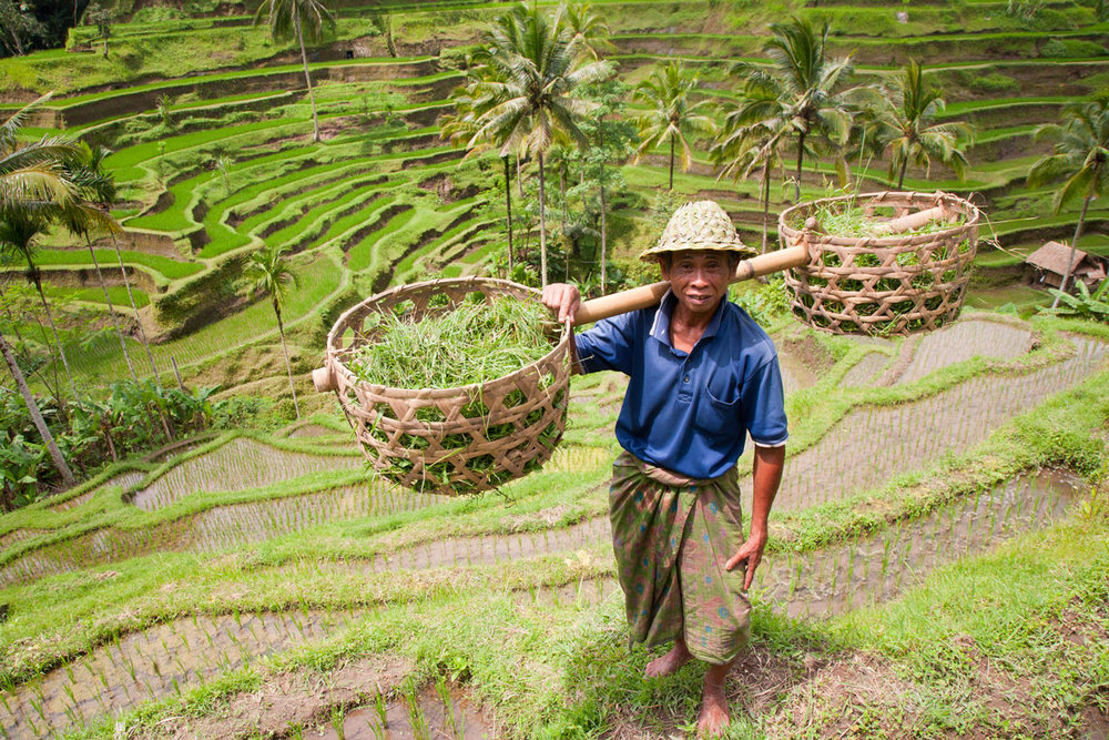 IDN_Ubud-Rice-Farmer-©-Adobe-Stock.jpg