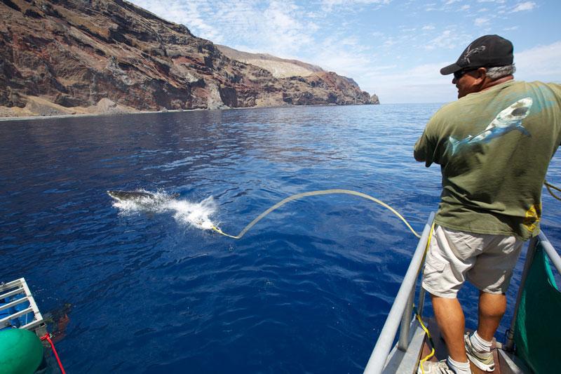 MEX_Solmar-V-Shark-Rangler-©13-Thomas-Baechtold-28.jpg