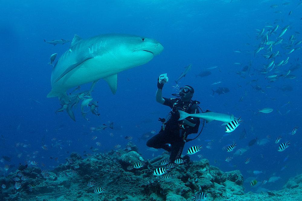 FJI_Beqa-Sharks-©11-Thomas-Baechtold-0413.jpg