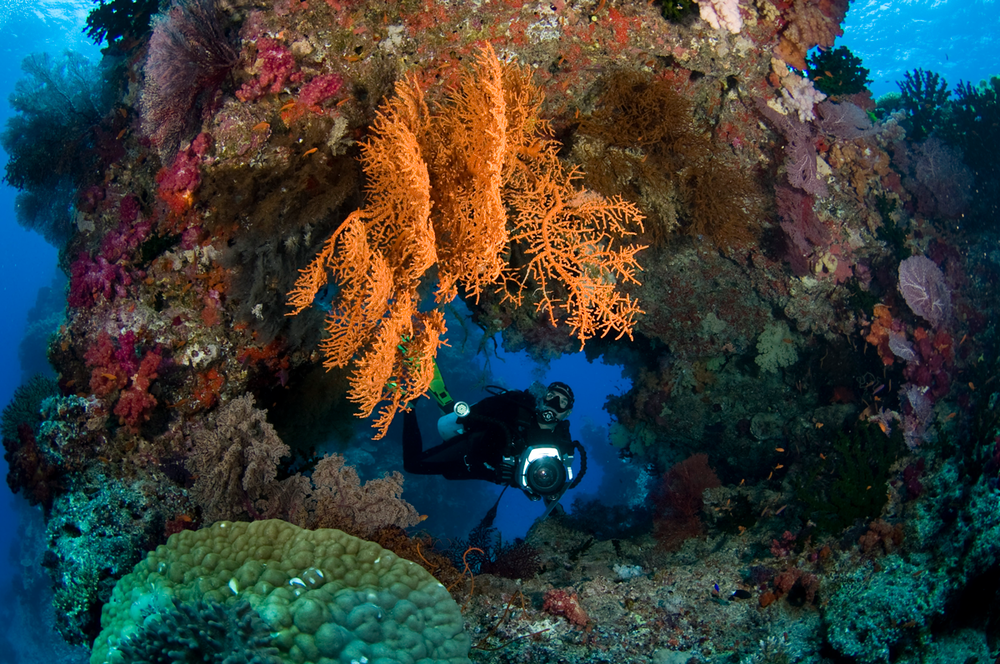 FJI_Rainbow-Reef-©09-Natalia-Baechtold-068.png
