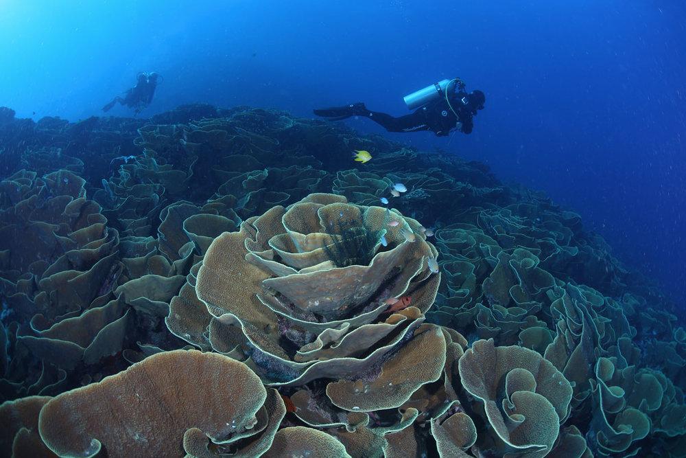 FJI_Taveuni-Island-UW-Cabbage-Patch-©17-Natalia-Baechtold-018.jpg