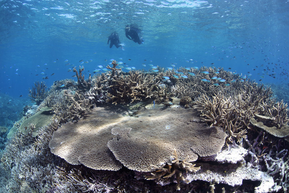 FJI_Taveuni-Island-UW-Rainbow-Reef-Snorkel-©17-Natalia-Baechtold-072.jpg