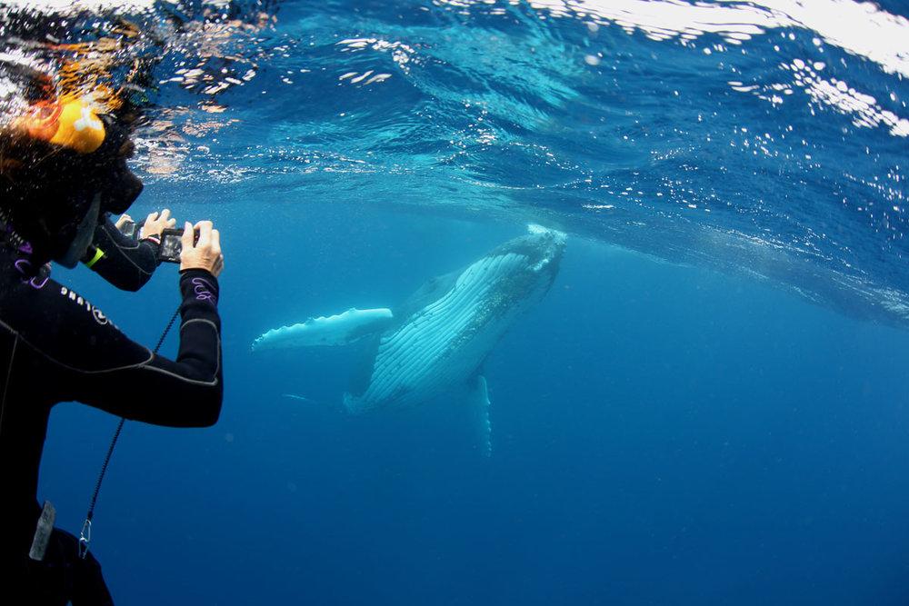 TON_Haapai-Islands-Humpback-Whales-©17-Natalia-Baechtold-809.jpg
