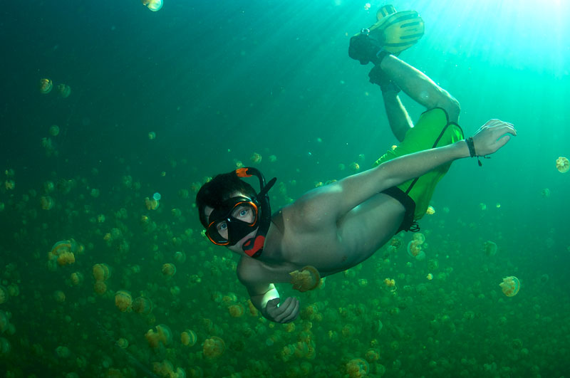 Ryan dives down into millions of Mastigias jelly fish in Jelly Fish Lake, Palau.