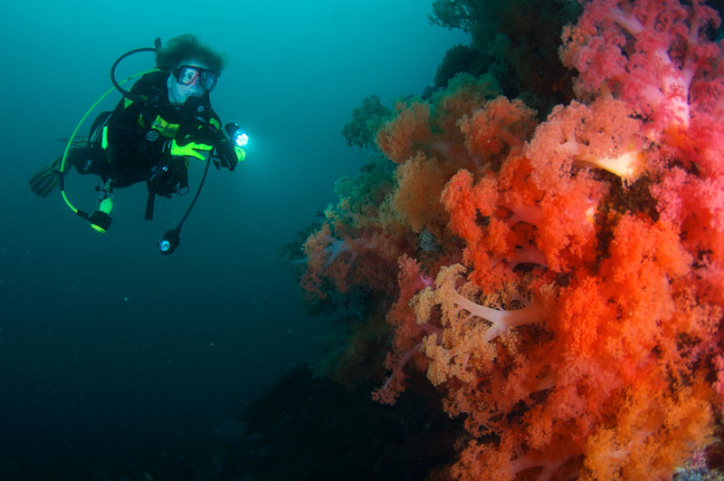 Pam diving along an abundant reef wall of soft coral, Philippines.