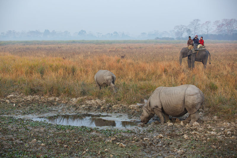 Andrew and Marina on elephant back photographing the splendid sight of Asian Rhino.