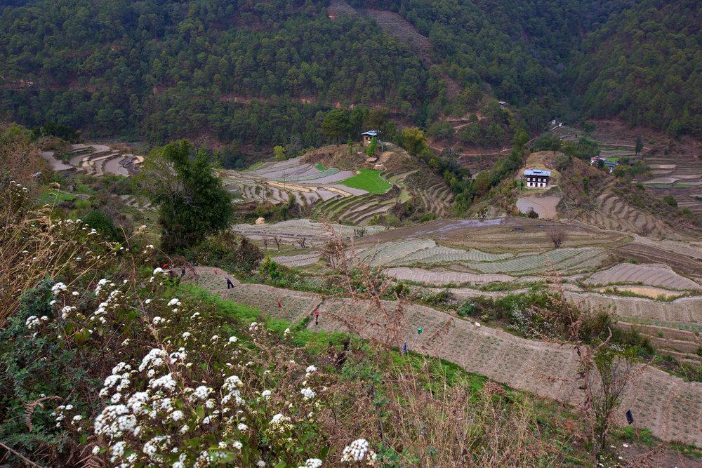 BTN_Thimpu-to-Punakha-©17-Thomas-Baechtold-736.jpg