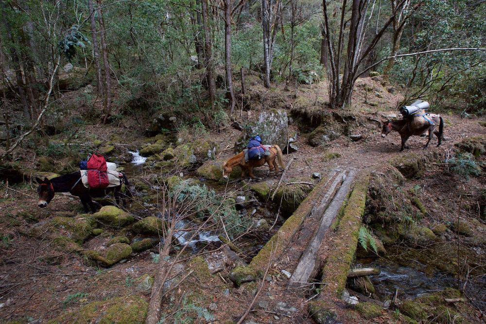 BTN_Sagala-Mountain-pass-trek-and-camp-©17-Thomas-Baechtold-189.jpg