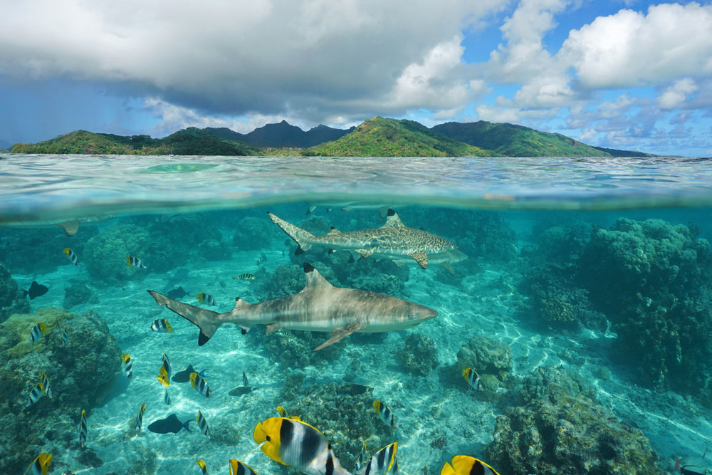 PYF_French-Polynesia-Reef-and-Sharks-©-AdobeStock_141593788.jpg