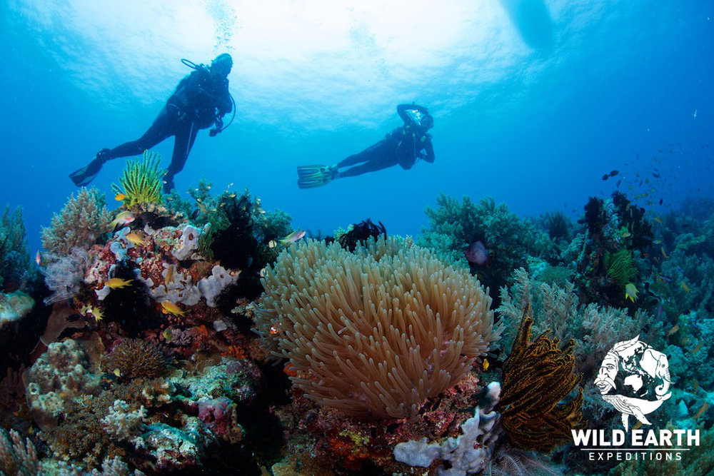 Philippines - Wild Earth Expeditions