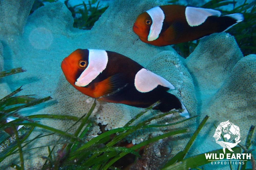 PHL_Balicasag-UW-Turtle-Point-©18-Robin-Aiello-002.jpg