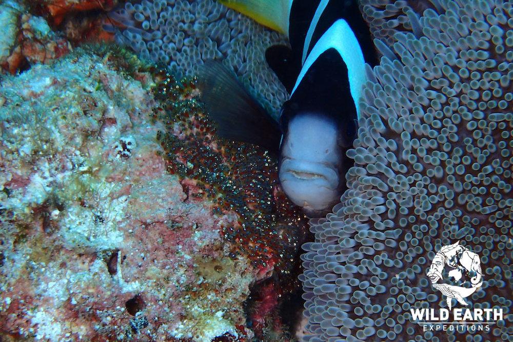 PHL_Balicasag-UW-Turtle-Point-©18-Robin-Aiello-026.jpg